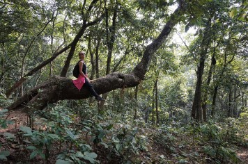 climbing-tree-pokhara-nepal