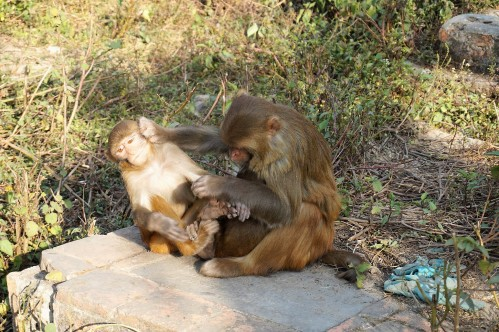 funny-monkeys-katmandou-nepal
