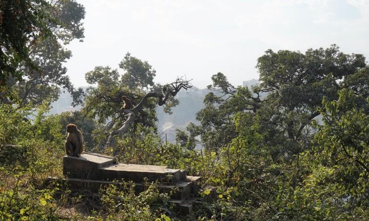 pashupatinath-swayambhunath