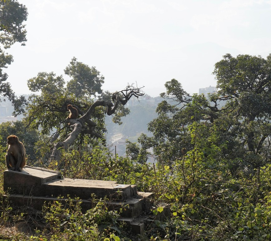 Pashupatinath Swayambhunath temple