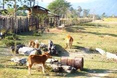 laos-day-2-thakhek-loop-28