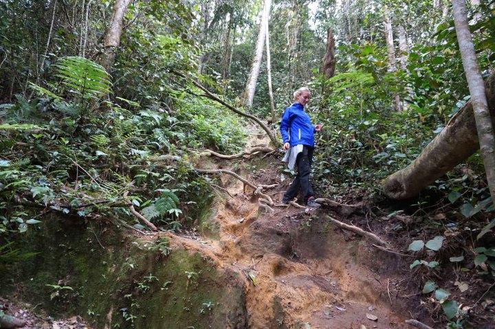 asie-malaisie-cameron-highlands-tanah-rata-02.jpg