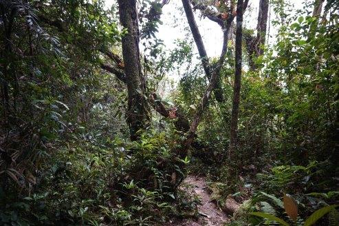 asie-malaisie-cameron-highlands-tanah-rata-05