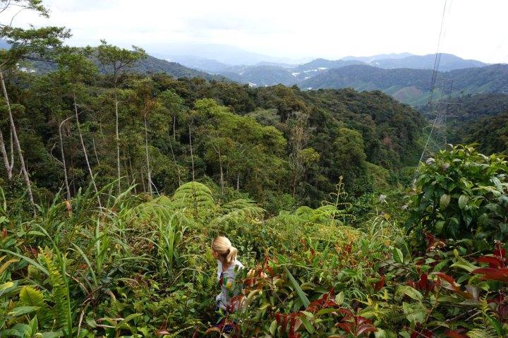 asie-malaisie-cameron-highlands-tanah-rata-14.jpg