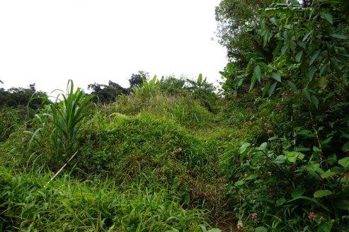 asie-malaisie-cameron-highlands-tanah-rata-17