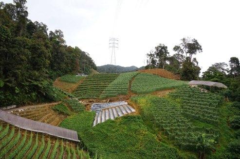 asie-malaisie-cameron-highlands-tanah-rata-24
