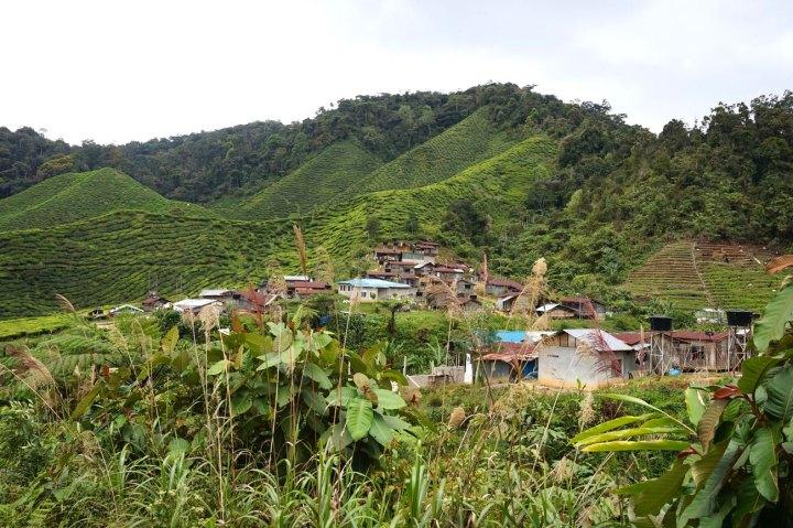 asie-malaisie-cameron-highlands-tanah-rata-28.jpg