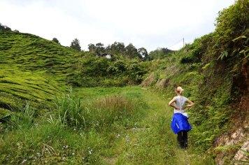 asie-malaisie-cameron-highlands-tanah-rata-34