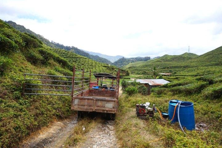 asie-malaisie-cameron-highlands-tanah-rata-37.jpg