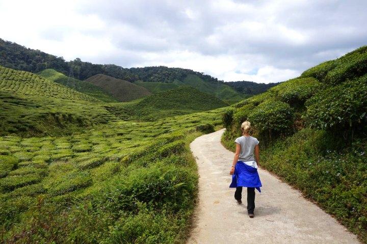 asie-malaisie-cameron-highlands-tanah-rata-40.jpg