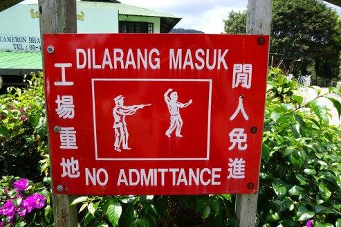 asie-malaisie-cameron-highlands-tanah-rata-43
