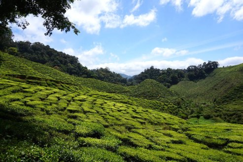 asie-malaisie-cameron-highlands-tanah-rata-47