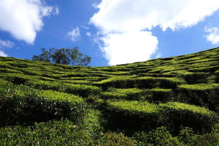 asie-malaisie-cameron-highlands-tanah-rata-65.jpg