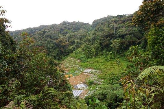 asie-malaisie-cameron-highlands-tanah-rata-79
