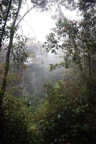 asie-malaisie-cameron-highlands-tanah-rata-92
