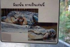 La très pédagogique affiche pour dire qu'il ne faut pas laisser trainer son bras dans la cage aux crocodiles