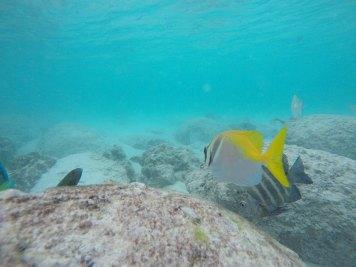 asie-thailande-koh-tao-plongee-11