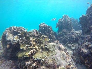 asie-thailande-koh-tao-plongee-56