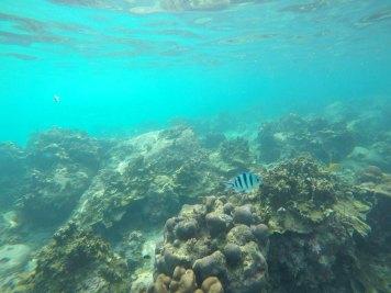 asie-thailande-koh-tao-plongee-57