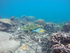 asie-thailande-koh-tao-plongee-61