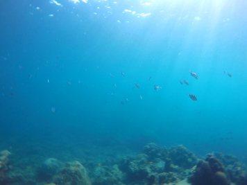 asie-thailande-koh-tao-plongee-72