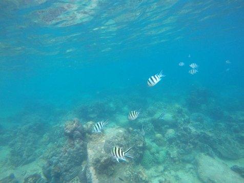 asie-thailande-koh-tao-plongee-84