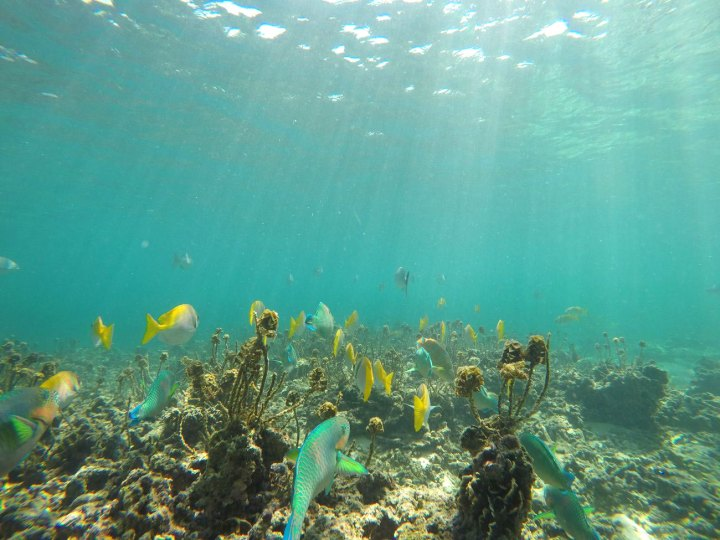 asie-thailande-koh-tao-plongee-92