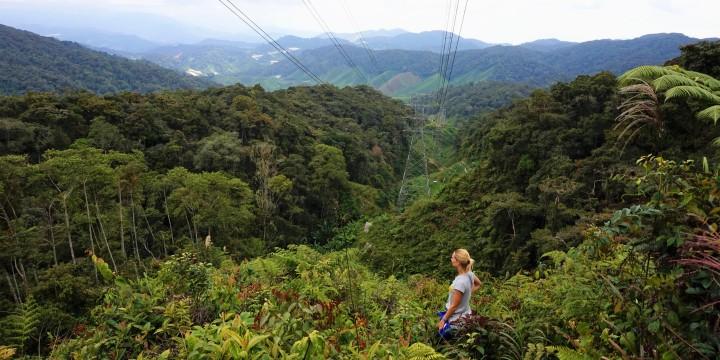 malaisiecameron-highlands