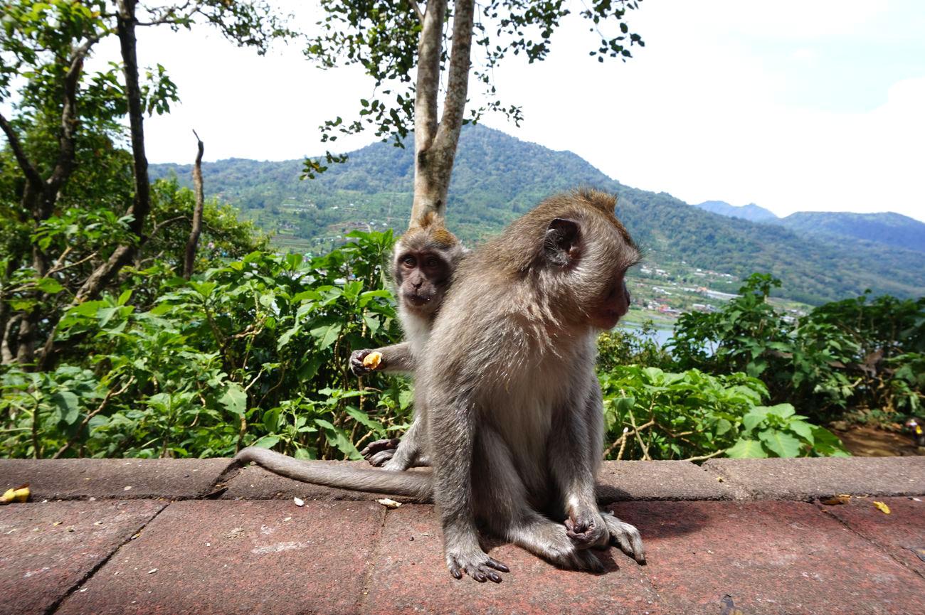 Asie-Indonesie-Bali-Bedugul-38.jpg