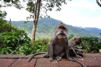 Asie-Indonesie-Bali-Bedugul-40