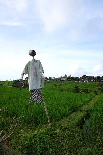 Asie-Indonesie-Bali-Jatiluwih-07
