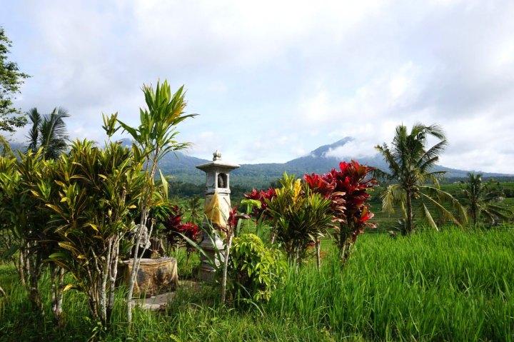 Asie-Indonesie-Bali-Jatiluwih-11