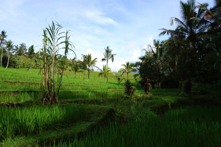 Asie-Indonesie-Bali-Jatiluwih-18
