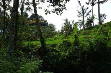Asie-Indonesie-Bali-Jatiluwih-19