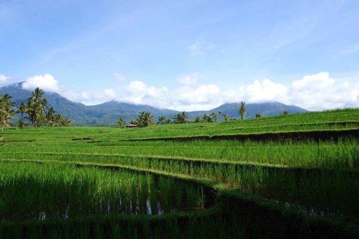 Asie-Indonesie-Bali-Jatiluwih-41