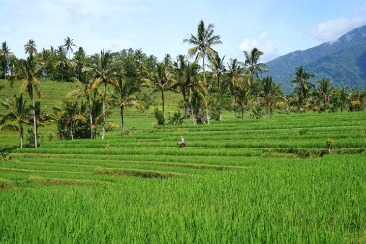 Asie-Indonesie-Bali-Jatiluwih-43