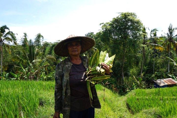 Asie-Indonesie-Bali-Jatiluwih-46