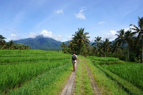 Asie-Indonesie-Bali-Jatiluwih-47