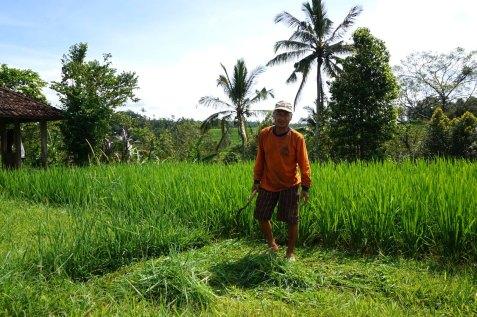 Asie-Indonesie-Bali-Jatiluwih-48