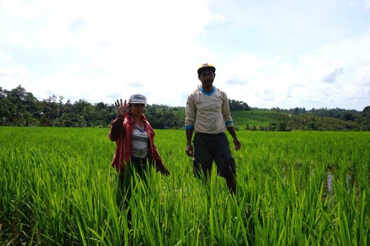 Asie-Indonesie-Bali-Jatiluwih-52