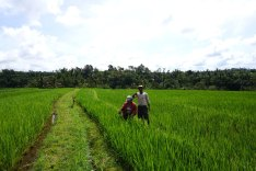 Asie-Indonesie-Bali-Jatiluwih-54