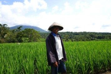 Asie-Indonesie-Bali-Jatiluwih-59