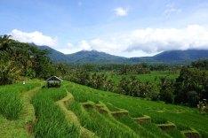 Asie-Indonesie-Bali-Jatiluwih-63