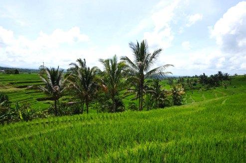 Asie-Indonesie-Bali-Jatiluwih-65