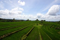 Asie-Indonesie-Bali-Jatiluwih-69