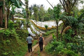 Asie-Indonesie-Bali-Munduk-01