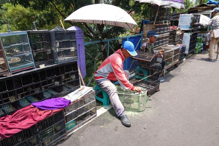 Asie-Indonesie-Malang-28.jpg