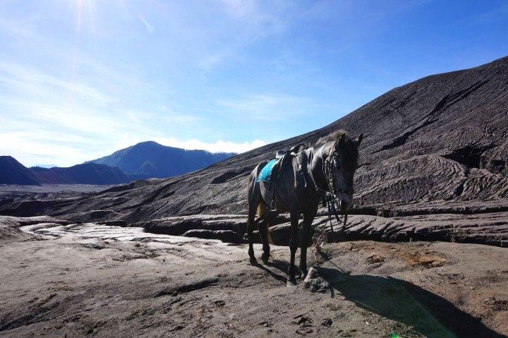 Asie-Indonesie-Mont-Bromo-Volcan-89