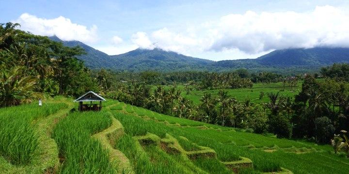 Indonesie Bali Jatiluwih