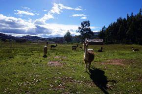 Pérou Cuzco Cusco 66